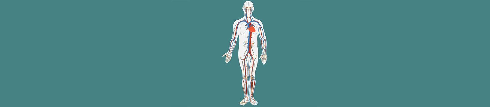 Corso di Posturologia, Postura e Prevenzione - Scuola di Naturopatia